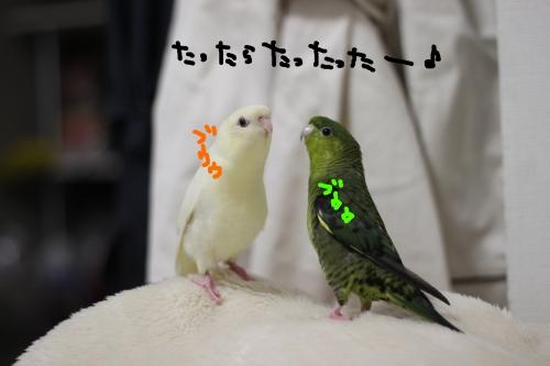 豆苗ダンス