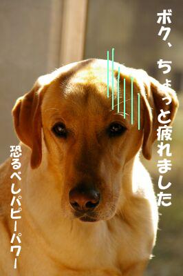 IMGP6607-megu.jpg