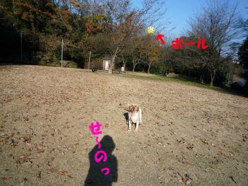 P1020758-091208.jpg
