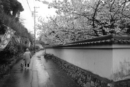 MONO桜