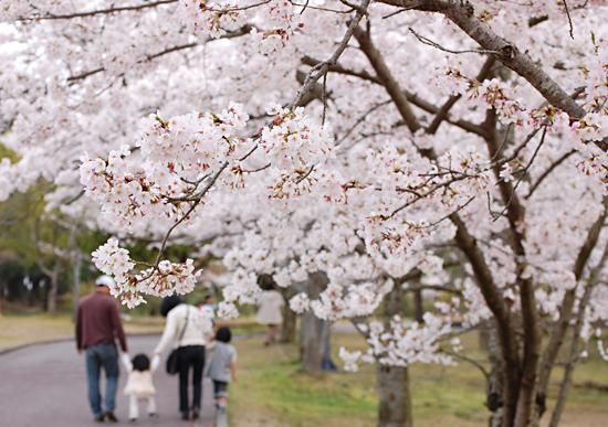 桜-公園-1