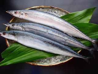 秋刀魚画像 (3)