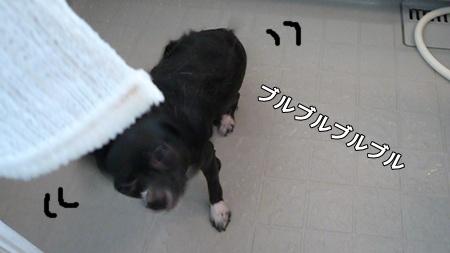 100606_4