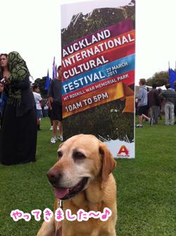 羊の国のラブラドール絵日記 Auckland International Cultural Festival1