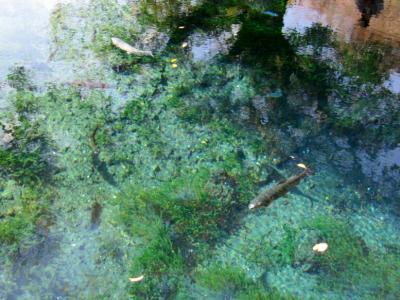 11月湧池