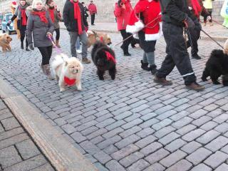 フィンランド犬6