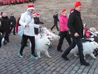 フィンランド犬7
