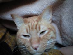 寝起き顔のリャオ
