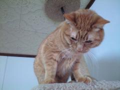 猫タワーの上