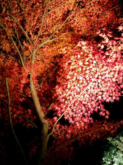 大日堂の紅葉