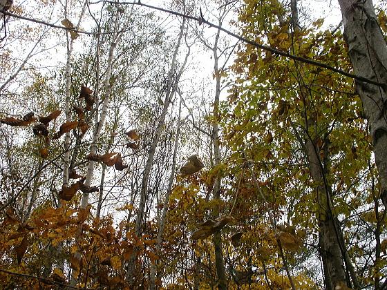 森は静寂に包まれています