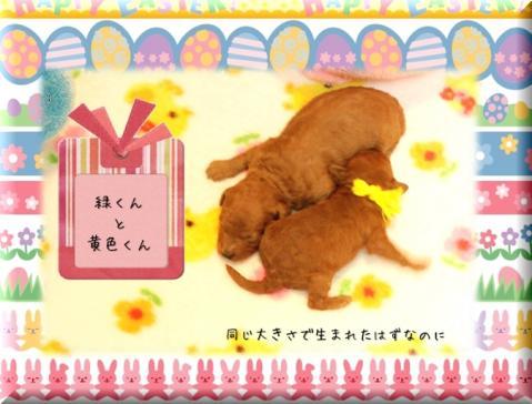 2010.3.20 みらんベビー4
