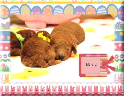 2010.3.20 みらんベビー7