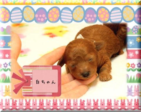 2010.3.20 みらんベビー8