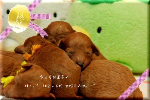 2010.3.20 みらんべびー11