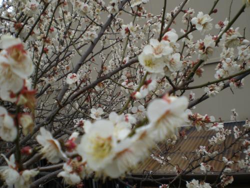 2010-02-15-06.jpg