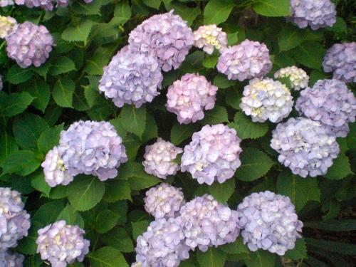 2010-06-21-05.jpg