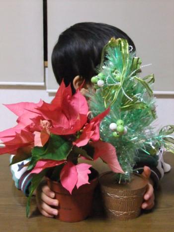 クリスマスツリー&ポインセチア