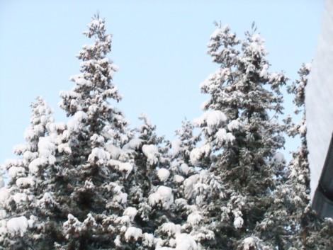 天然のツリー2
