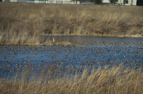 鳥たくさん