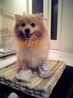 ポチ・ボクサー2