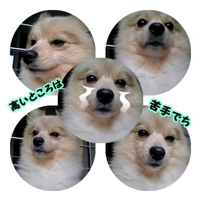 kowamaru.jpg
