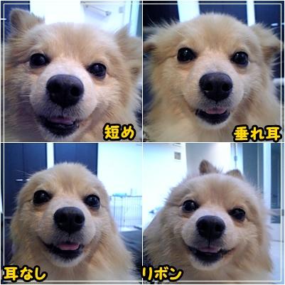 mimikore.jpg