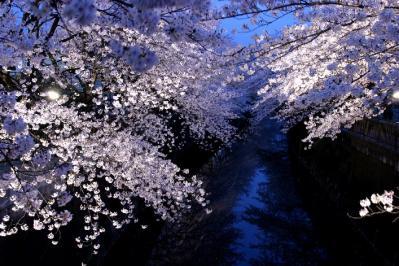 sakura2003S01.jpg