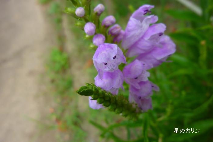花虎の尾4