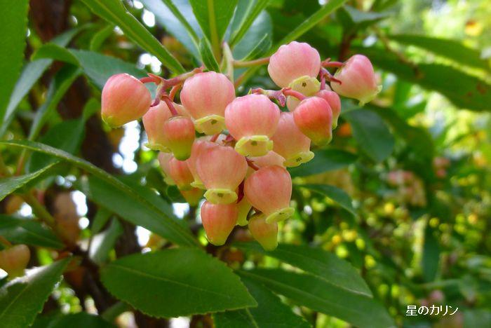 紅花姫イチゴの花1