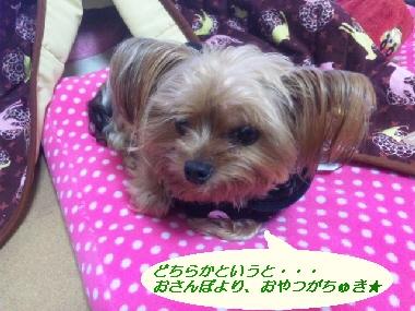 2010_0306_124422-SH3D00150.jpg