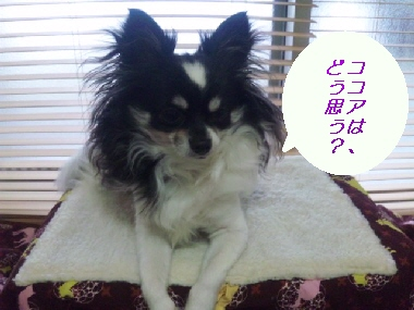 2010_0306_124518-SH3D00190.jpg