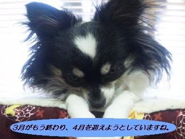 2010_0319_211305-SH3D023600.jpg