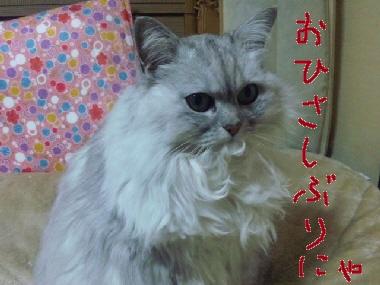 2010_0326_200130-SH3D03150.jpg