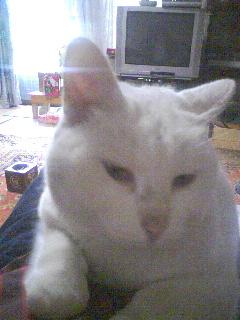 20061111_248360.jpg