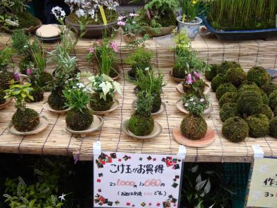 お富士さんの植木市 ⑤