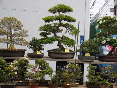 お富士さんの植木市 ⑩