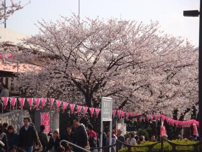 2010 桜橋花まつり