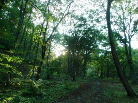 アファンの森