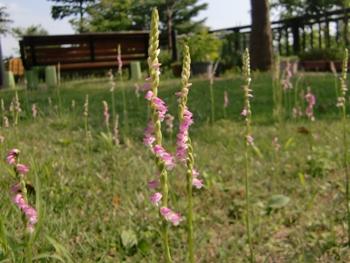 特養の庭5