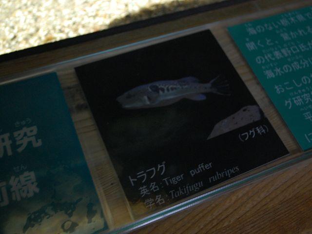 なかがわ水遊園内部23