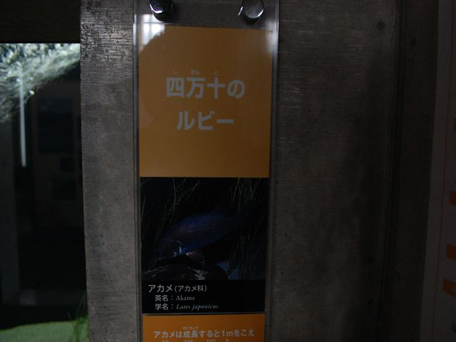 なかがわ水遊園内部28