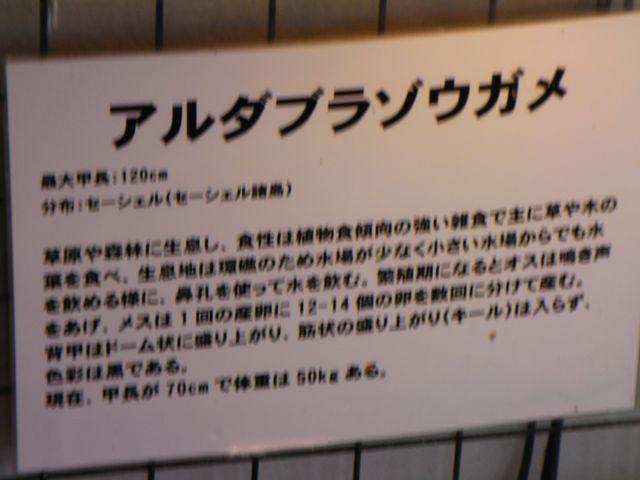 あゆみざき8