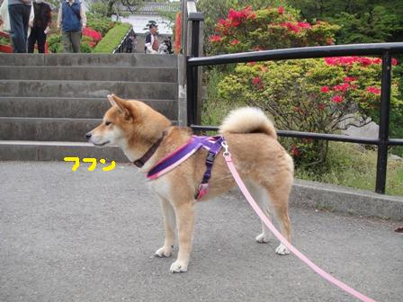 ichi103d.jpg