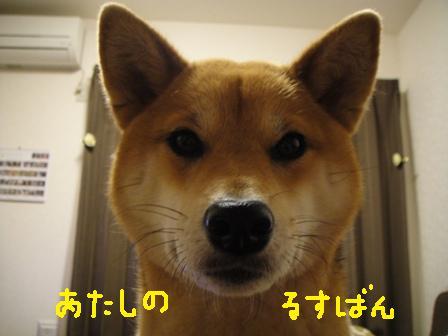 ichi103f.jpg