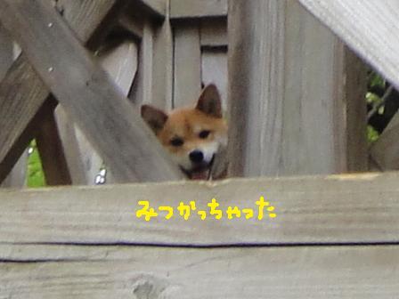 ichi104k.jpg