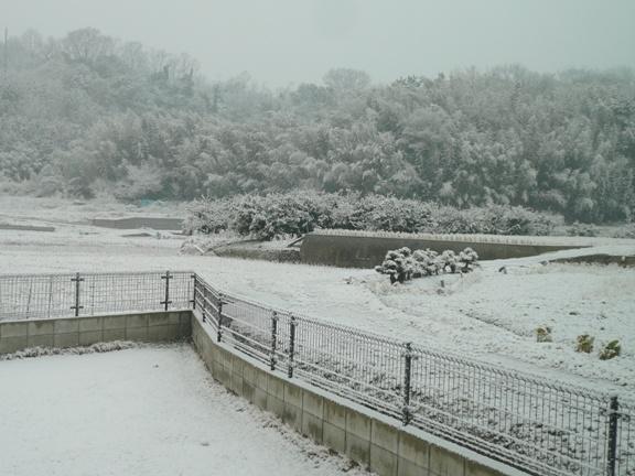 去年ほどじゃないけど、今年一番の積雪。