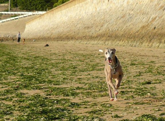 この日は、トトが一番良く走りました♪
