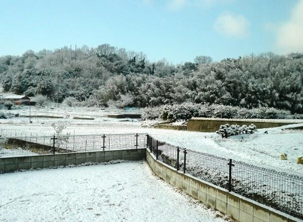 この写真を撮った1時間後には、木に積もった雪がほぼなくなりました
