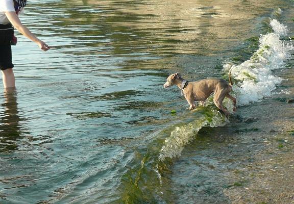 トトが入水するのを見て、慌ててカメラを構えて近づきました